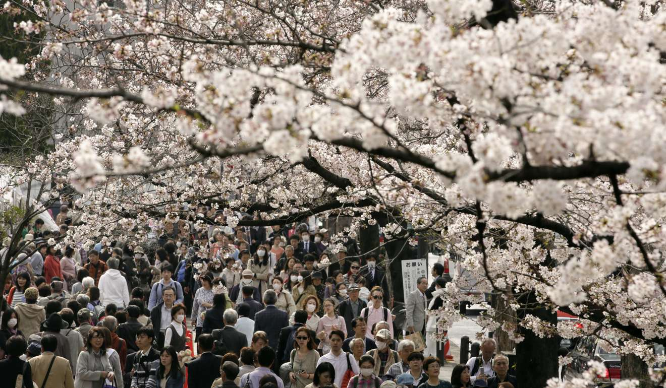 The Good The Bad And The Ugly Sides To Japans Cherry Blossom