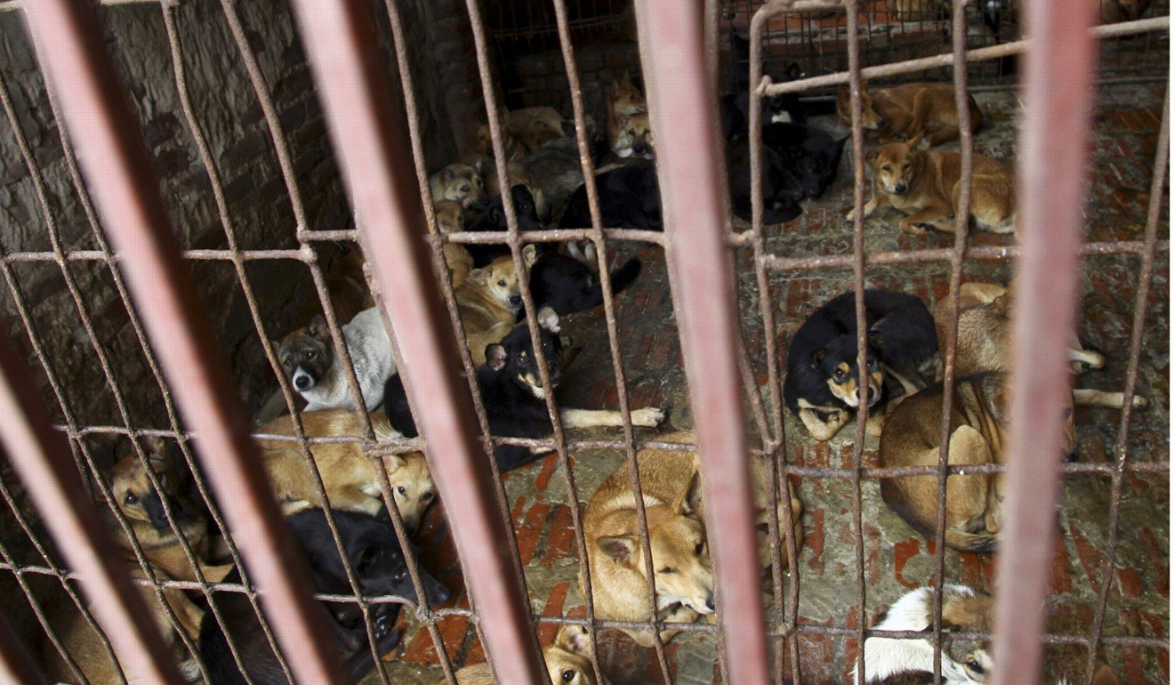 US lawmakers move to ban eating dogs and cats, saying ... - photo#47