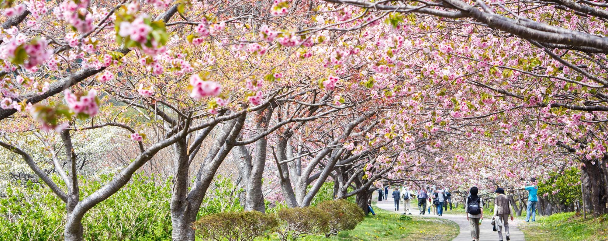Hokkaido in bloom.