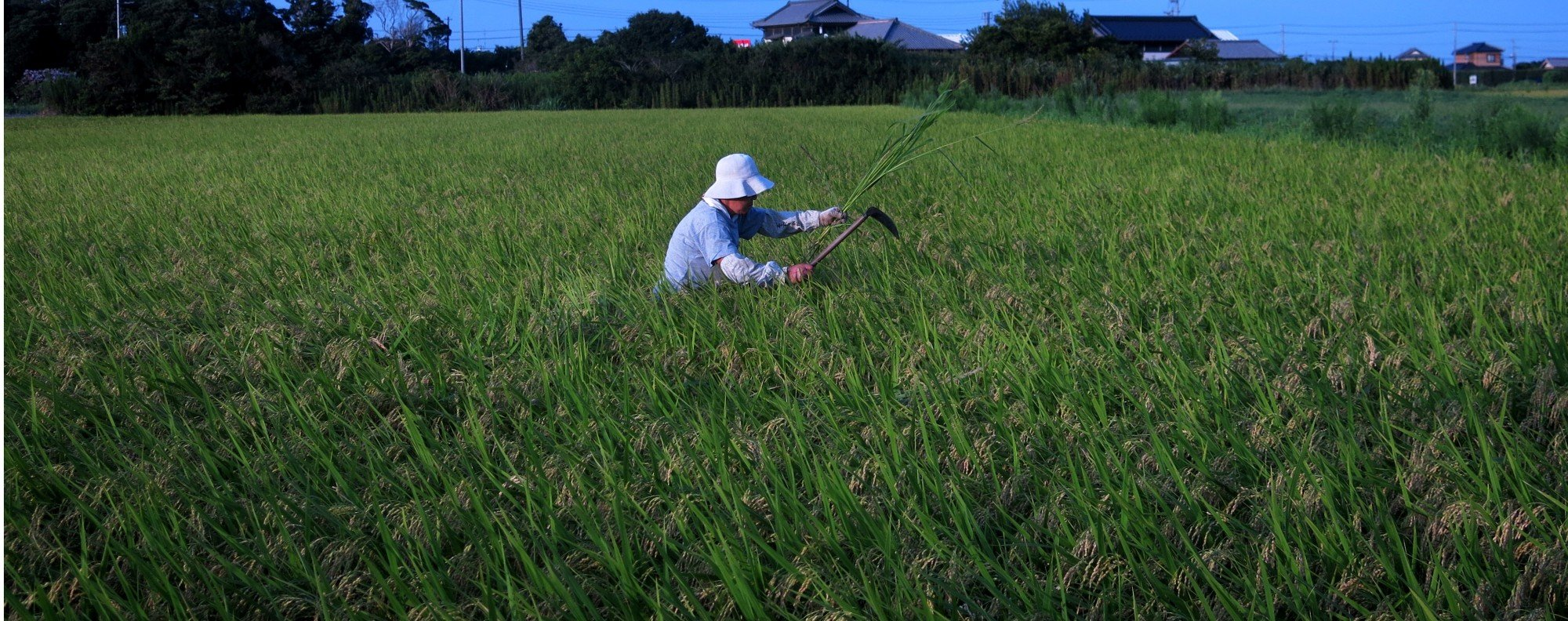 Loser: Japanese farming. Photo: AFP