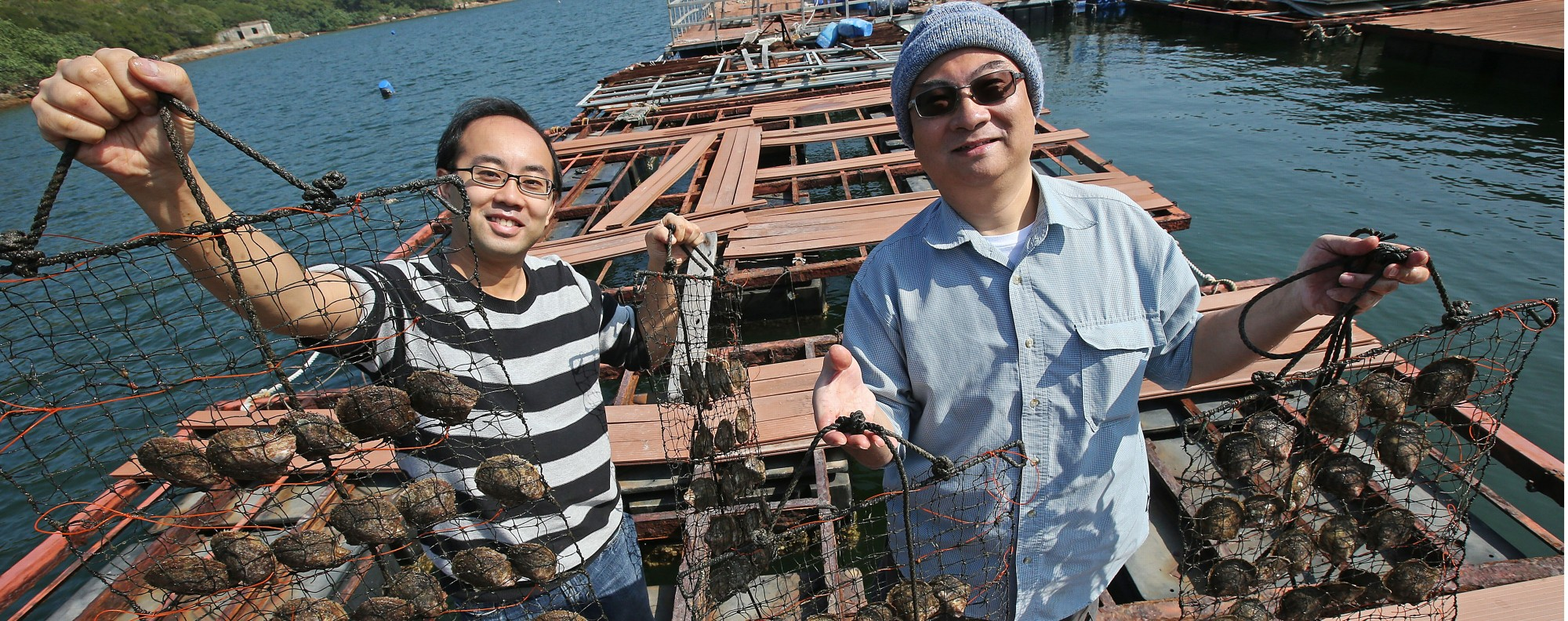 Farming oysters near Tai Po. Picture: David Wong