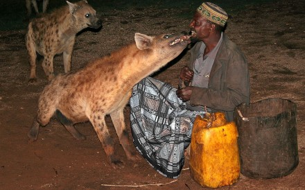 A Harari man and his wild-hyena show.