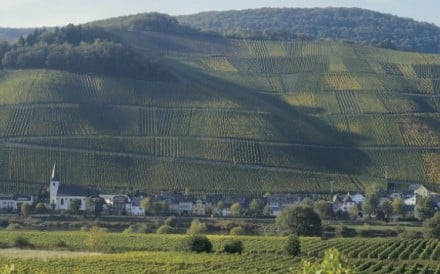 Germany's Moselle Valley is one of riesling's heartlands.