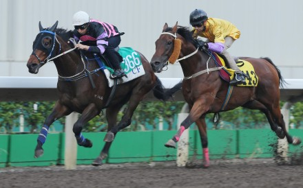 Joao Moreira has decided to pilot Peniaphobia (right) for the Group Two Premier Bowl at Sha Tin on Sunday. Photos: Kenneth Chan