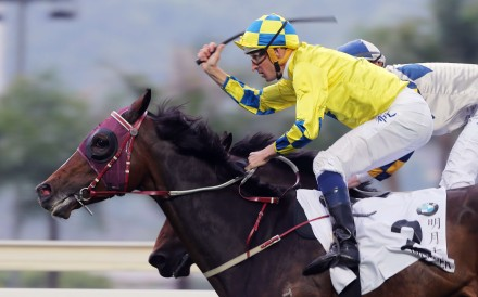 Werther wins the Hong Kong Derby on Sunday, but will he be the next Hong Kong Cup winner? Photo: Kenneth Chan