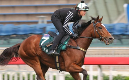 Rising Romance galloping on the turf at Sha Tin. Photos: Kenneth Chan