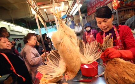 More than 3,000 samples taken from poultry farms in Hong Kong were found to be clear of bird flu. Photo: Sam Tsang