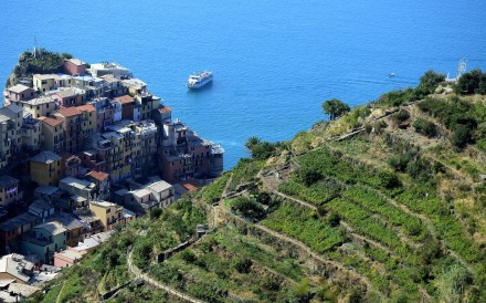 Vineyards near the village of Manarola in Italy's Cinque Terre area. Photo: AFP