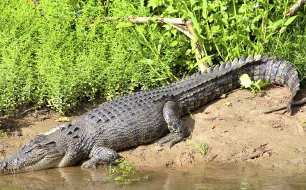 Nearer Jakarta than Sydney, Darwin, with its laid back vibe, is a great starting point to explore a huge area where hardly any humans, but plenty of crocodiles and other exotic fauna, live – such as Danish bush bar owner King Kai