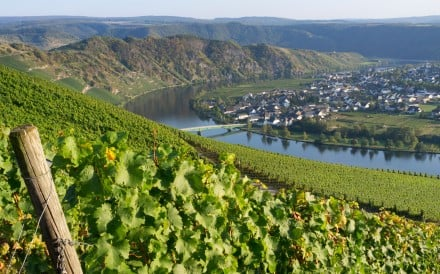 Piesport village in the Mosel Valley, Germany. Picture: Alamy