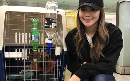 Natalie Phan already has volunteers to adopt the animals saved last year. Now all she needs is people willing to take them across the Pacific
