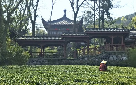 The variety of green tea historically grown around the scenic West Lake is among the best in China, and the spring picking season has become a tourist draw. Here's everything you need to know about joining in the harvest