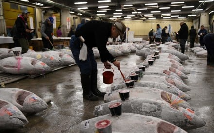 Access to the tuna auction for tourists will end on September 15. Photo: AFP