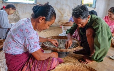Workers grading beans at a coffee factory in Pyin Oo Lwin district in Myanmar. Photo: Alamy