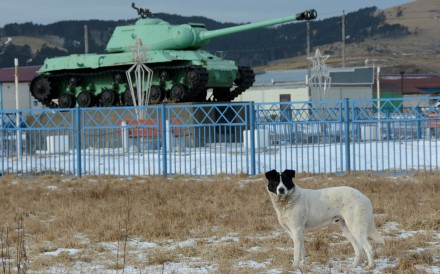 A dog stands in front of a Soviet tank in the village of Malokurilskoye on the island of Shikotan, Southern Kurils, Russia in December 2016. Photo: Reuters