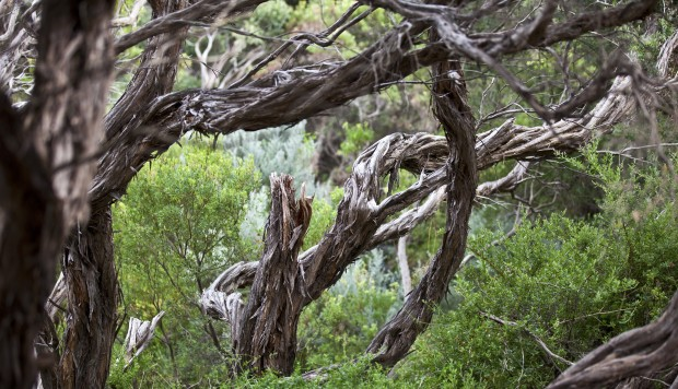 Like us, trees are sweating to survive Australia's extreme heatwaves