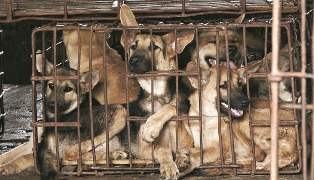 The Activists Taking On Asia's Cruel, And Booming, Trade In Dog Meat
