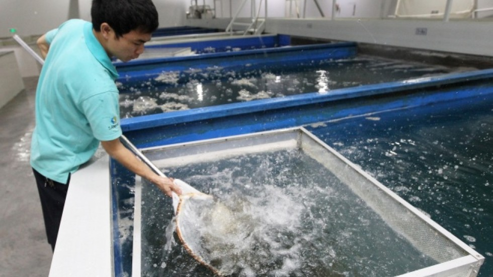 Hong kong garment firm diversifies into indoor fish farms for Indoor fish farming