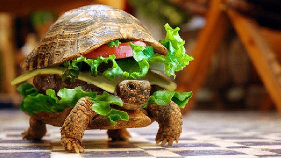 Man tries to smuggle turtle onto plane by hiding it in a hamburger ...
