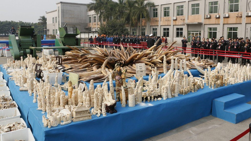 Beijing's decision to destroy ivory a welcome step to saving the