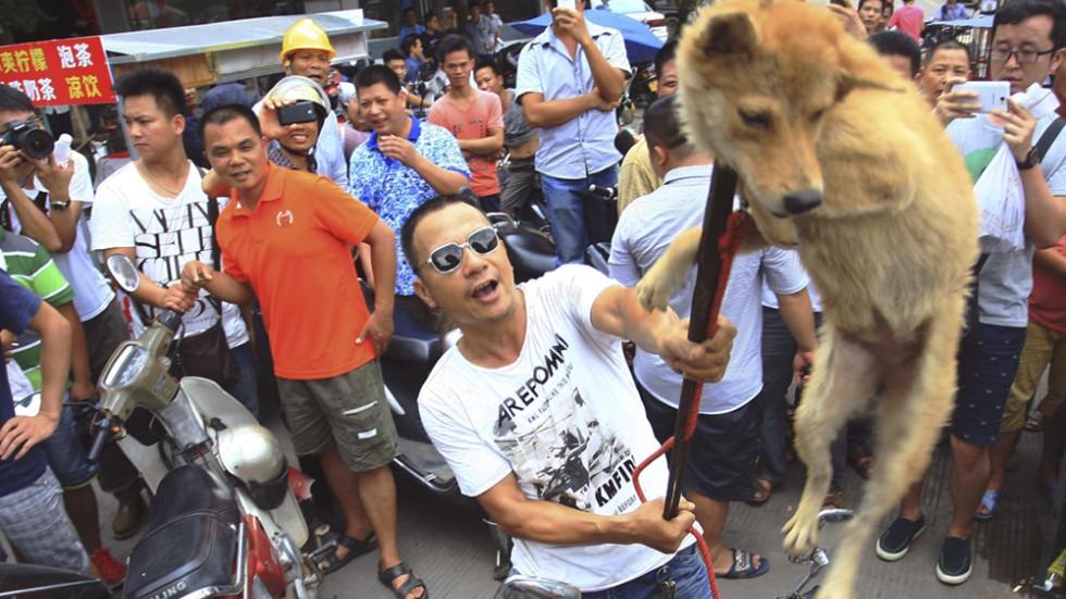 Yulin Dog Eating Festival