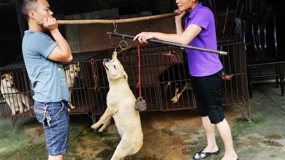 5 000 dogs culled in one chinese city after rabies leaves five dead