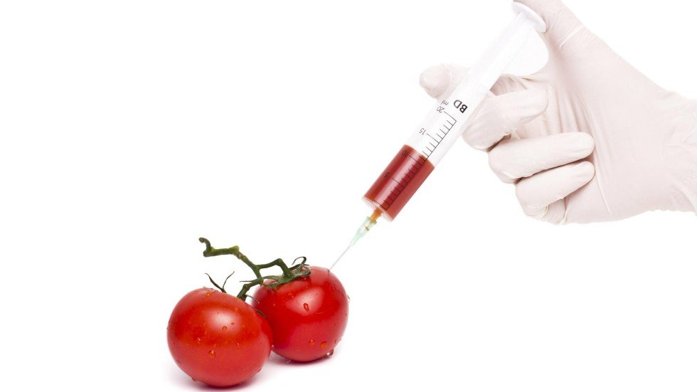 Are Genetically Modified Foods Safe For Human Consumption