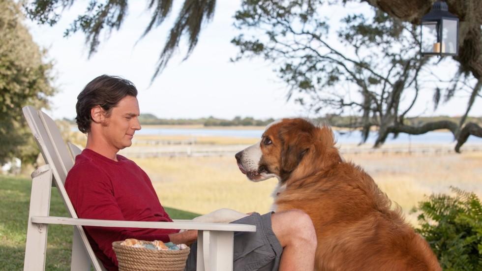 The Dog Walker Film