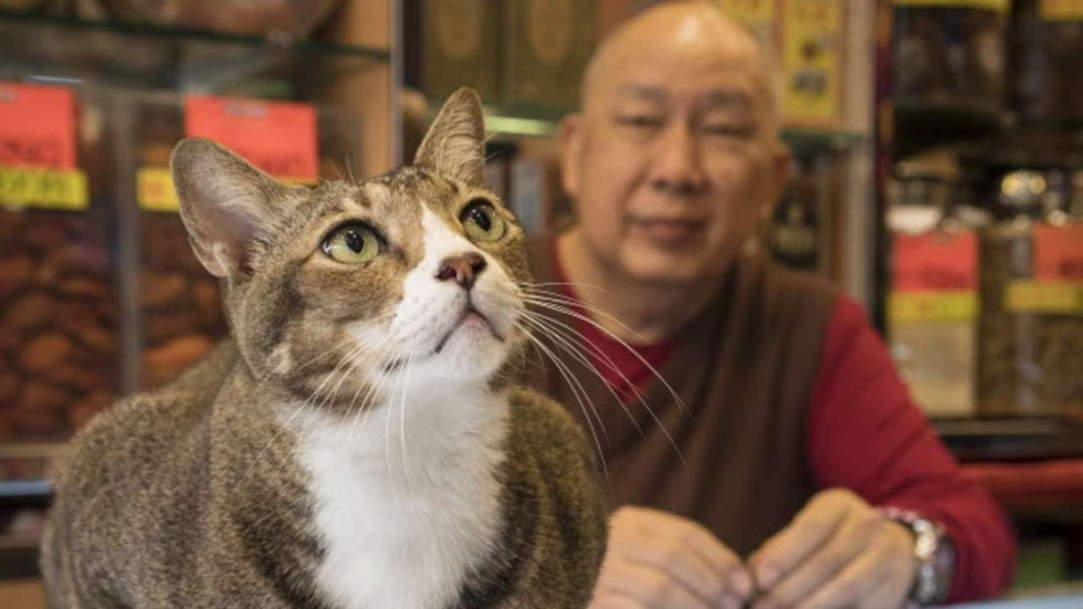 snap cat dutch photographer captures fabulous felines living in