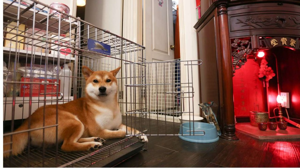Owning a dog in a Hong Kong shoebox apartment is no walk in the park ...
