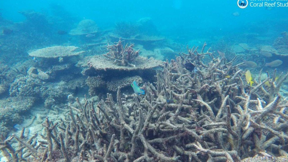 an essay on coral reefs Free essay: the ecosystem of the coral reef coral reefs are among the most  diverse and productive communities on earth they are found in the warm, clear.