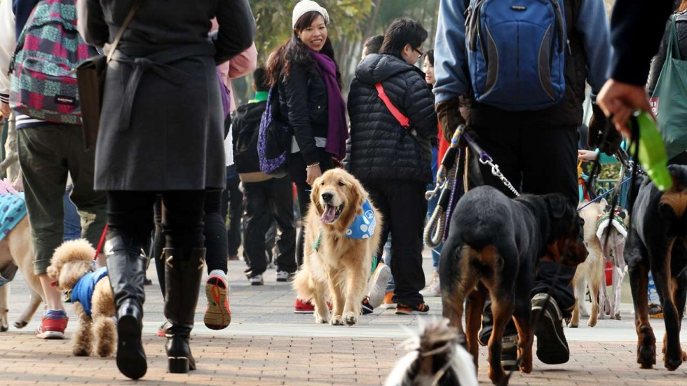 Some Ideas For Cleaning Up Hong Kongs Dog Excrement