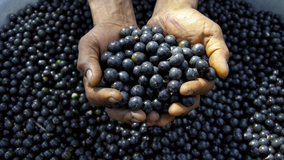 where can i get acai berries
