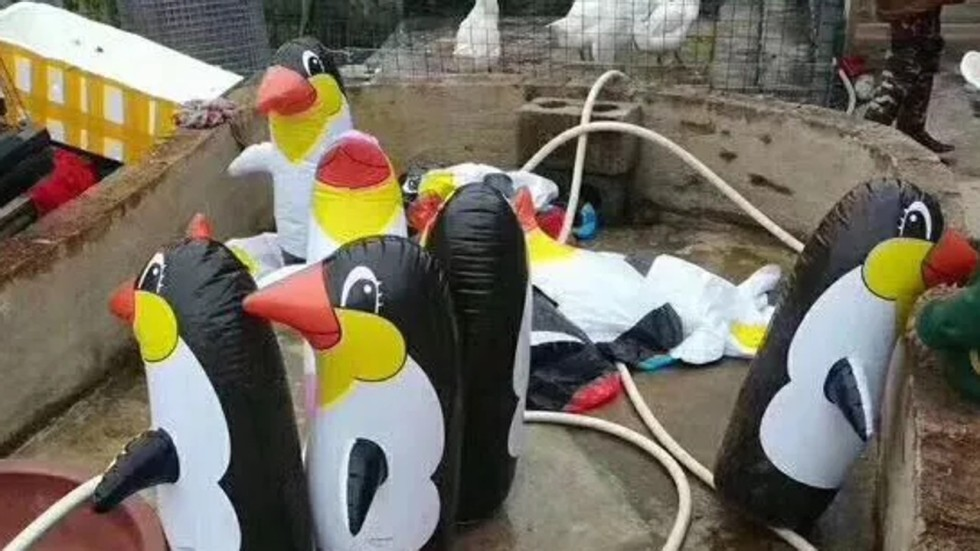 Image result for penguin balloon zoo