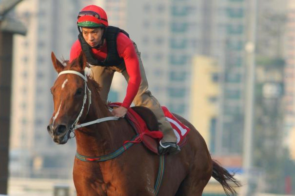 Beauty Flash looks the part in his final gallop ahead of the National Day Cup. Photo: Kenneth Chan