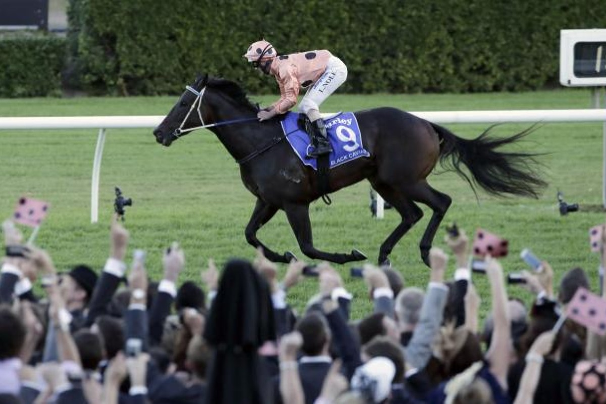 Punters celebrate as Luke Nolen rides Black Caviar to victory in the TJ Smith Stakes at Royal Randwick, the super mare's final race. Photo: AP