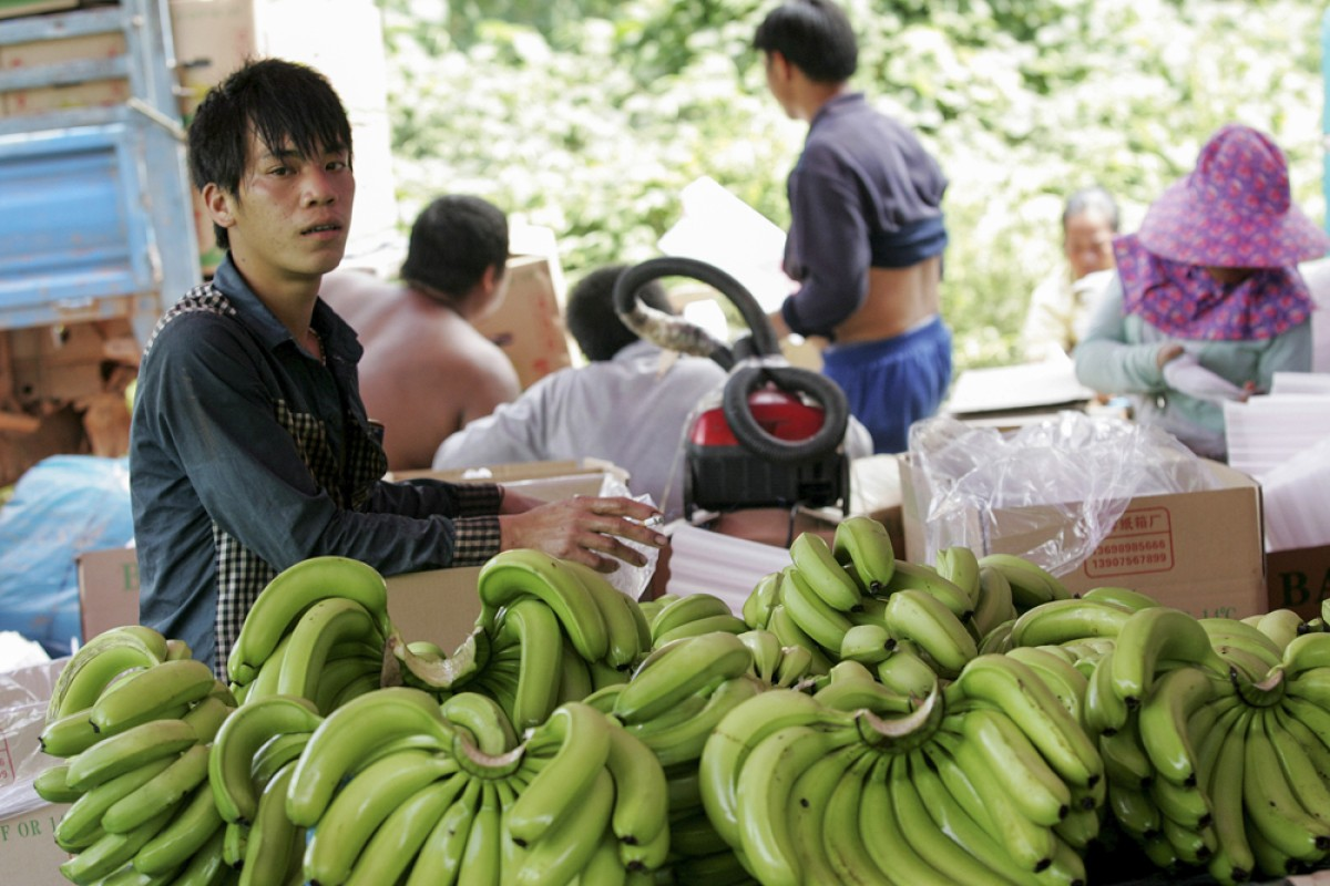 """Chinese workers pack bananas into boxes marked """"Produce of China"""" in northern Laos."""