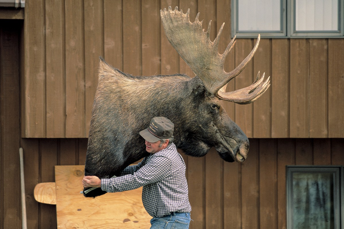 A taxidermist in Montana, in the United States, during the filming of Michael Palin's Hemingway Adventure, in 1998.