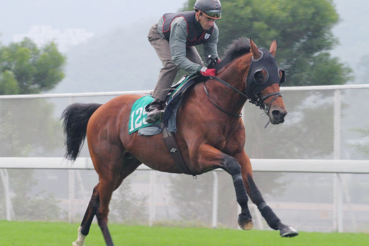 Akeed Mofeed is raring to go in Sunday's Jockey Club Cup. Photo: Kenneth Chan
