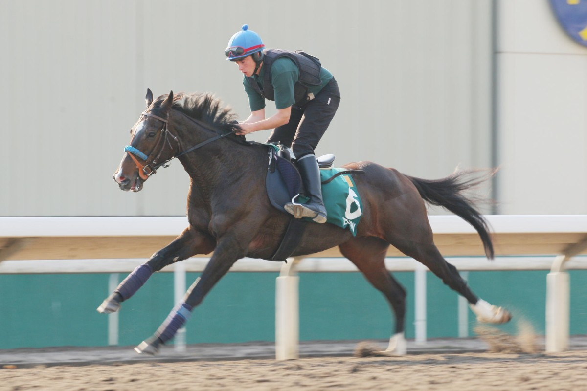 Hong Kong Vase contender Simenon gallops in the first of three laps he completed on the all-weather track at Sha Tin yesterday. Photo: Kenneth Chan