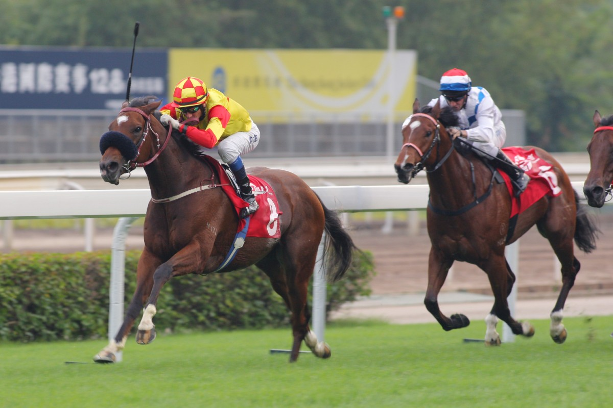 This local Hong Kong Sprint contender is one of the few horses that looks over the odds in early markets overseas. Who is he? Photo: Kenneth Chan