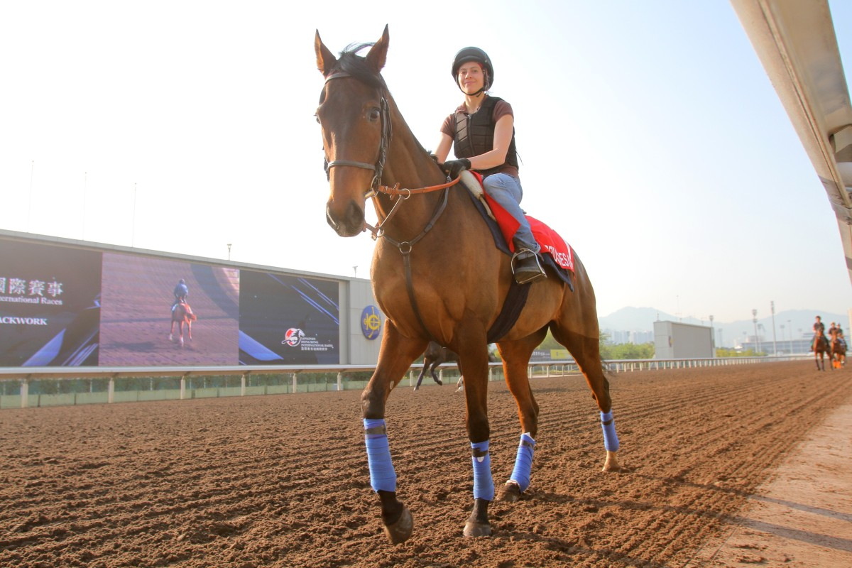 Cirrus Des Aigles returns for another tilt at Hong Kong glory. Photo: Kenneth Chan