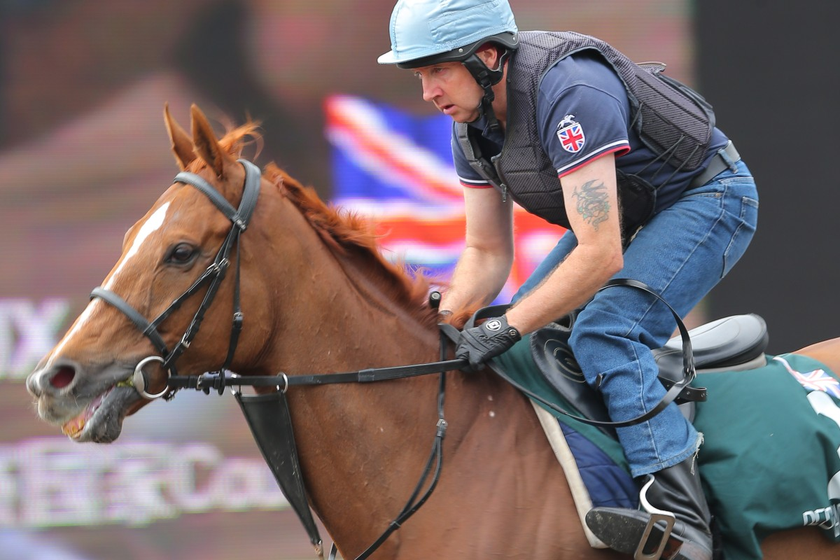Red Cadeaux has a light workout ahead of Sunday's race. Photos: Kenneth Chan