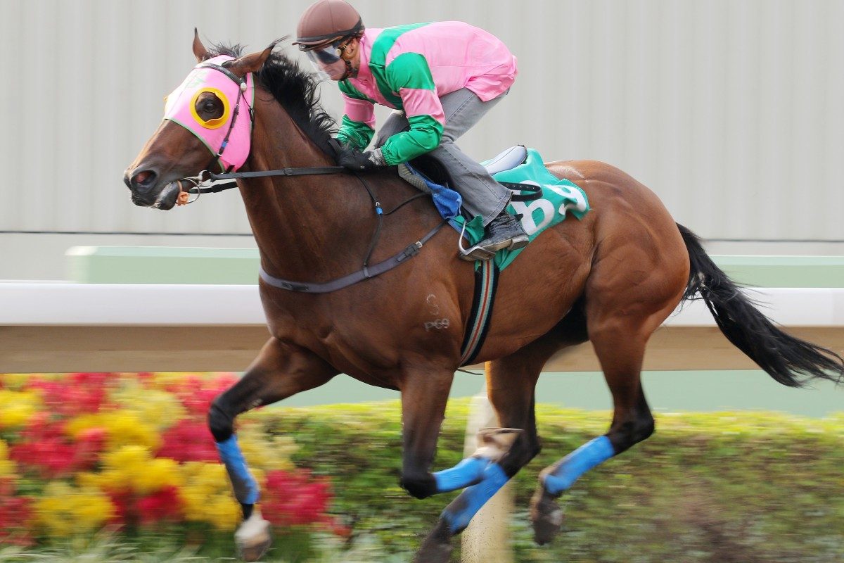 Aerovelocity, with Zac Purton aboard, won a barrier trial over 1,200m last week, but trainer Paul O'Sullivan says don't expect too much for Sunday's Premier Bowl. Photos: Kenneth Chan