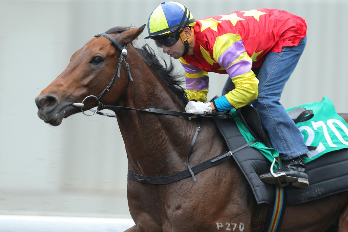 Designs On Rome, with Joao Moreira aboard, is put through a barrier trial on Tuesday. Photo: Kenneth Chan