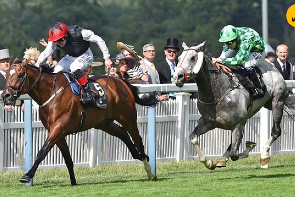 Free Eagle beats The Grey Gatsby to win the Prince Of Wales's Stakes at Royal Ascot earlier this year. Photo: AFP