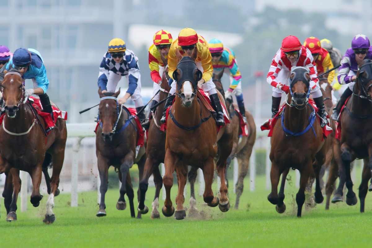 The local contenders for the Hong Kong Sprint look pretty even after the Jockey Club Sprint. Photo: Kenneth Chan