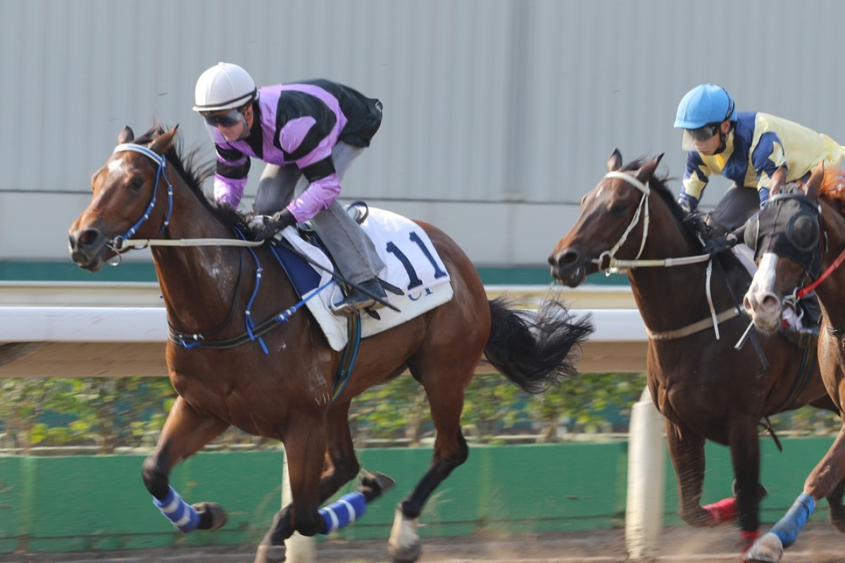 Zac Purton gives Formula Galore a gallop during a workout last year. Joao Moreira takes over the mount and provides banker material for punters. Photos: Kenneth Chan