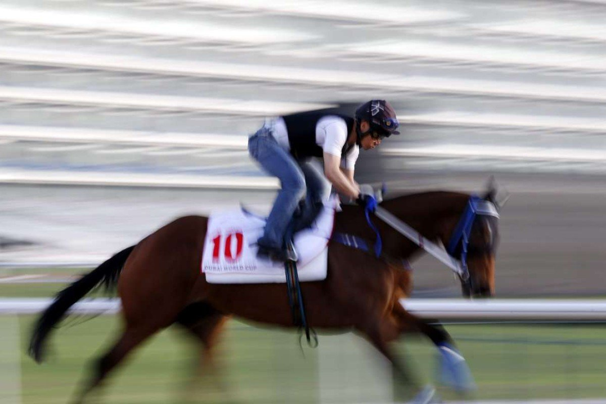 Gun Pit is given a hit-out in Dubai as he prepares for the US$10 million World Cup. Photo: EPA