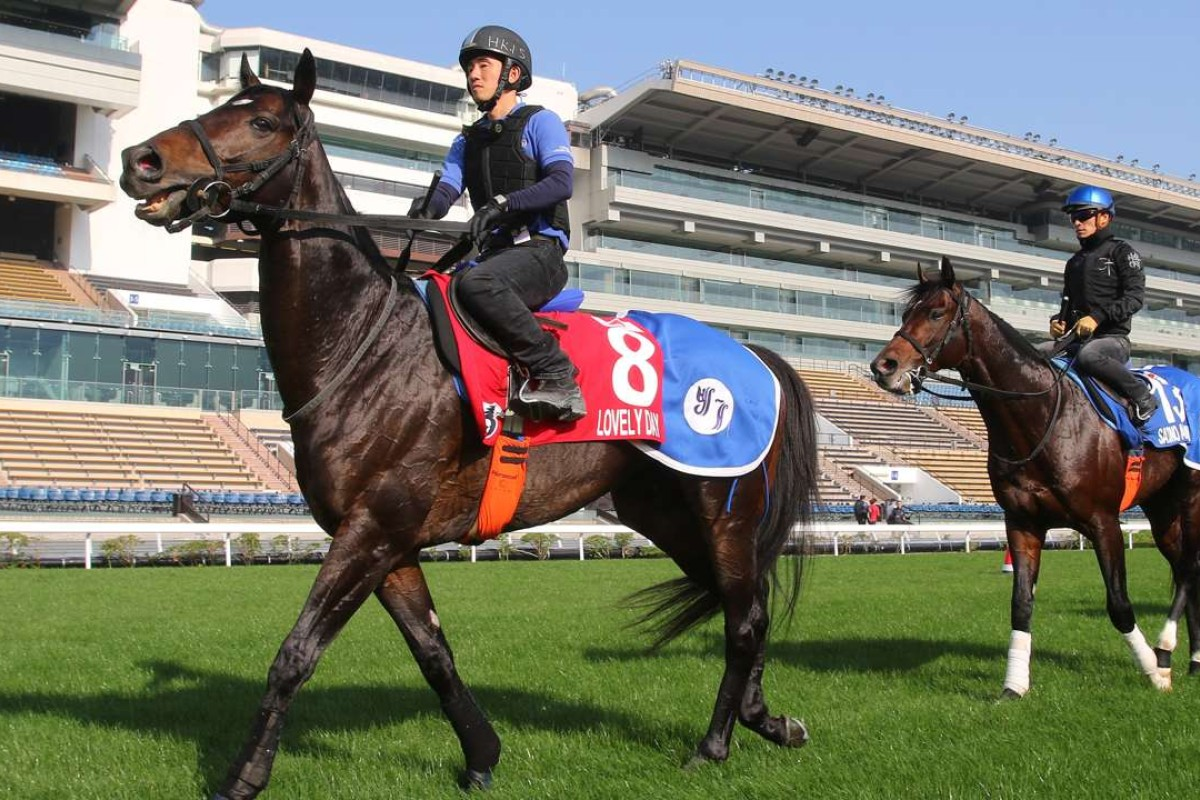 Lovely Day and Satono Aladdin head back to the stable at Sha Tin. Photos: Kenneth Chan